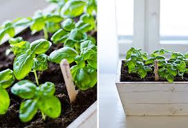 """Tiina Paasiku aialoeng """"Talvealused külvid ja maitsetaimede kasvatamine aknalaual"""""""